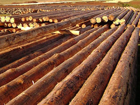Sud america forestal productos de madera de pino - Postes de madera ...